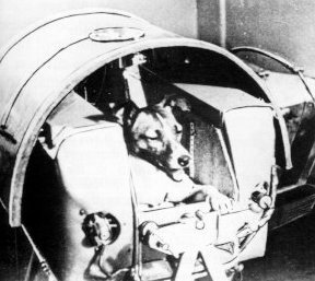 dog in space apollo - photo #6